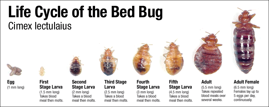 Village bed bugs value Yahoo is